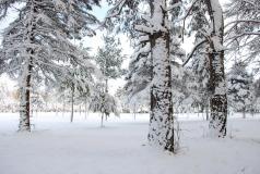 0801_Winter_004