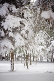 0801_Winter_005