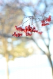 Winter_008