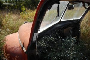 Weeds and Old Cars